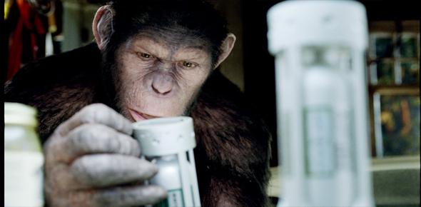 Monos Inteligentes Interior